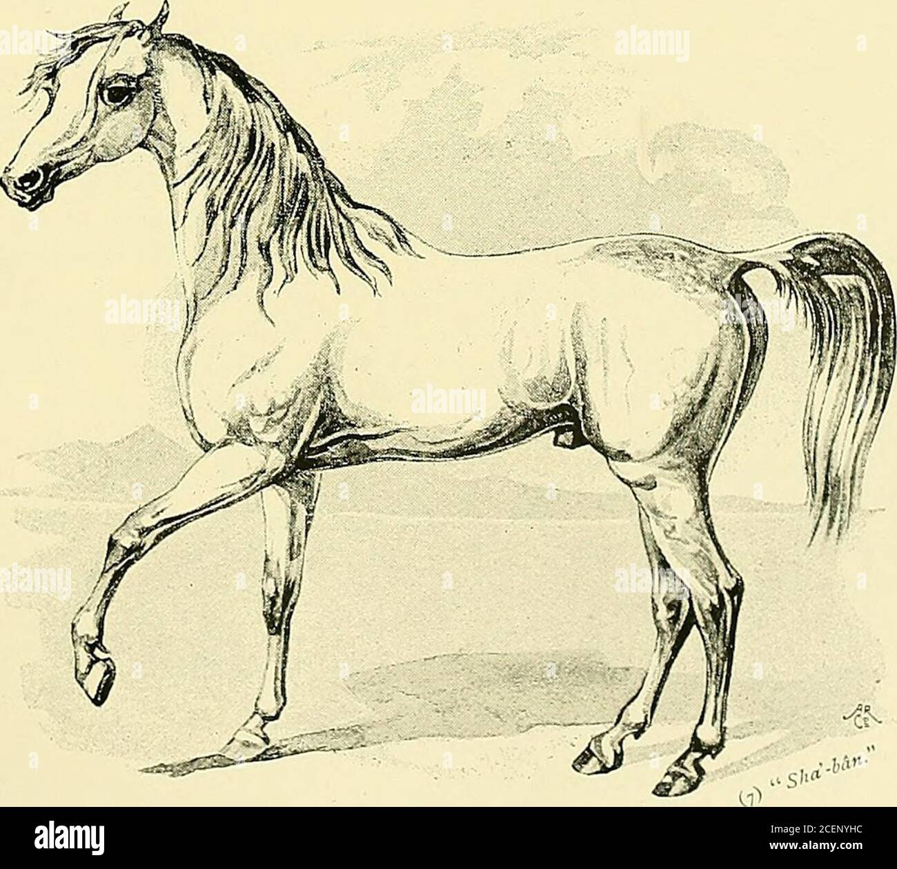 The Arabian Horse His Country And People With Portraits Of Typical Or Famous Arabians And Other Illustrations Also A Map Of The Country Of The Arabian Horse And A Descriptive