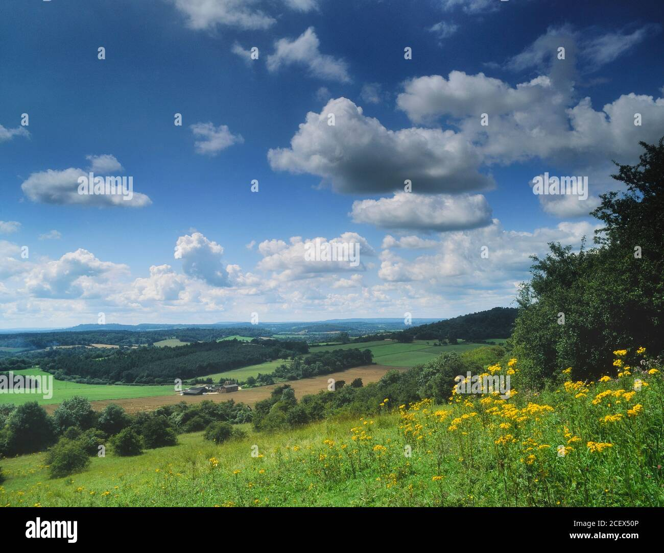 The view form Newlands Corner, Surrey Hills Area of Outstanding Natural Beauty. North Downs, Surrey, England, UK Stock Photo