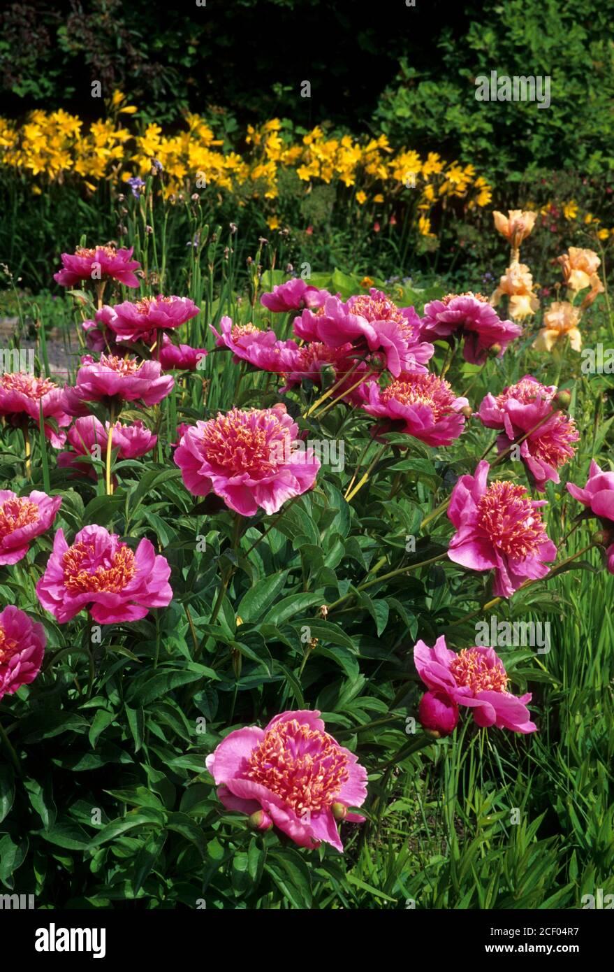 Flower garden, Lawson Gardens, Pullman, Washington Stock Photo