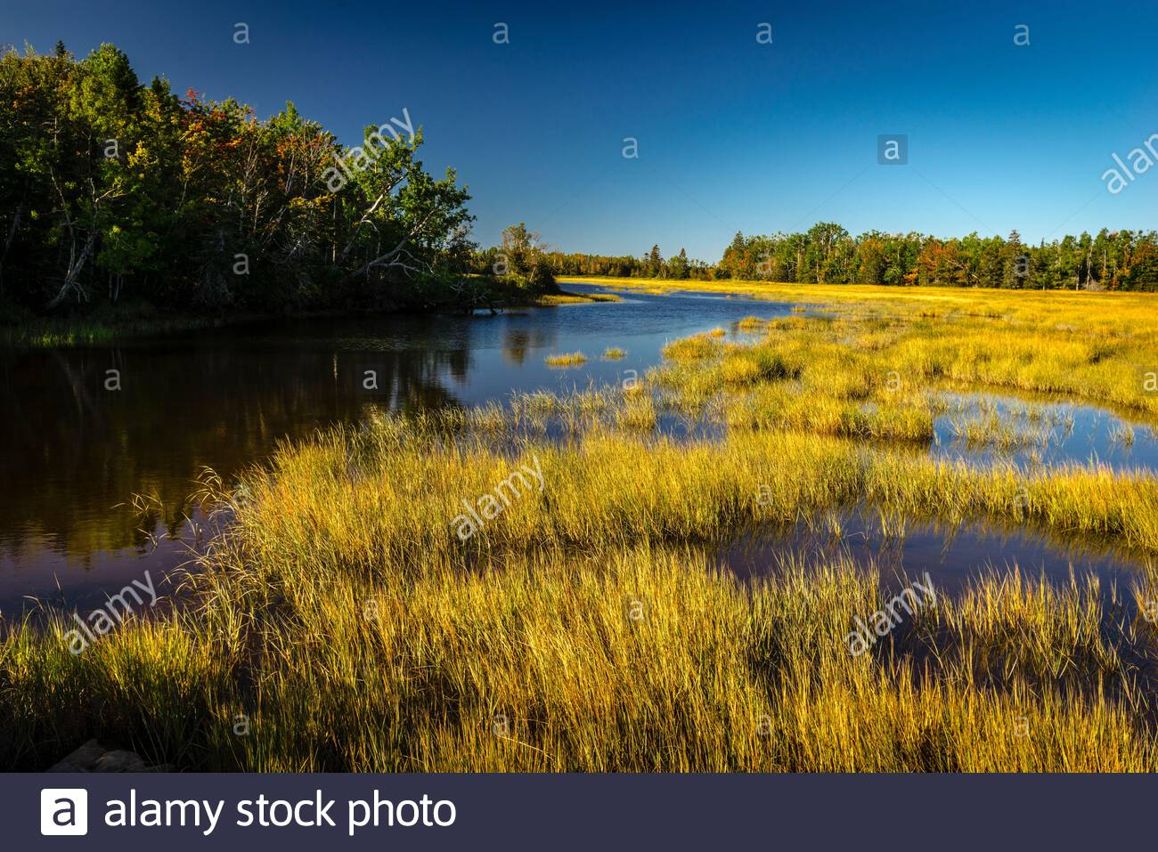 Tidal Estuary Salt Marsh   Saint-Simon, New Brunswick, CA Stock Photo
