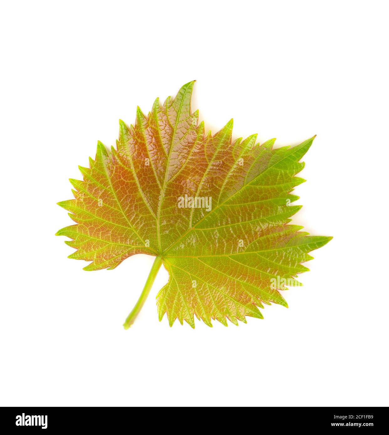 Green Grape Leaves Isolated On White Background Spring With Leaves Of Grape Vine Stock Photo Alamy