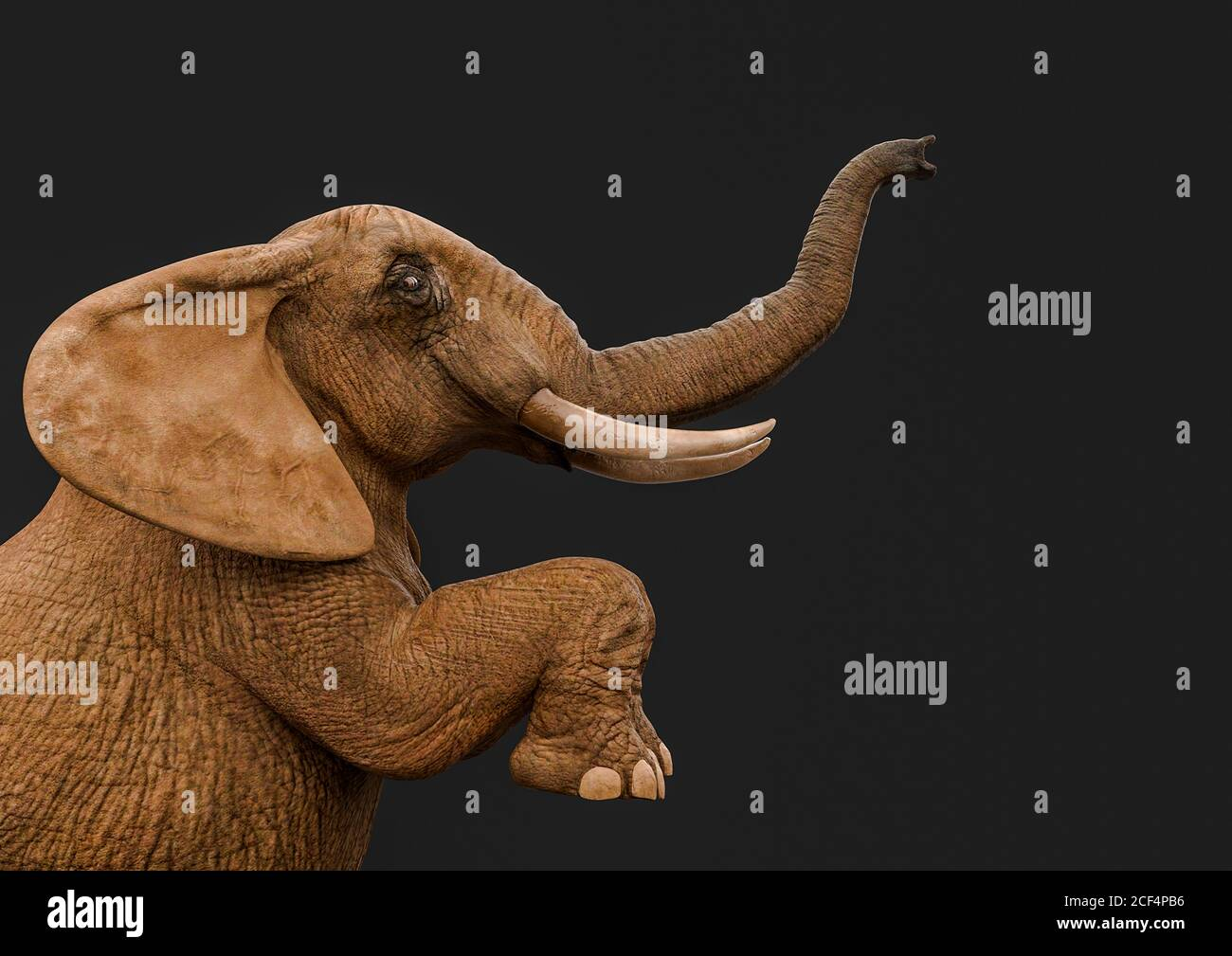 Elephant Trunk Up High Resolution Stock Photography And Images Alamy 22 free photos of elephant standing. https www alamy com african elephant is standing up in a dark grey background side view 3d illustration image370742938 html
