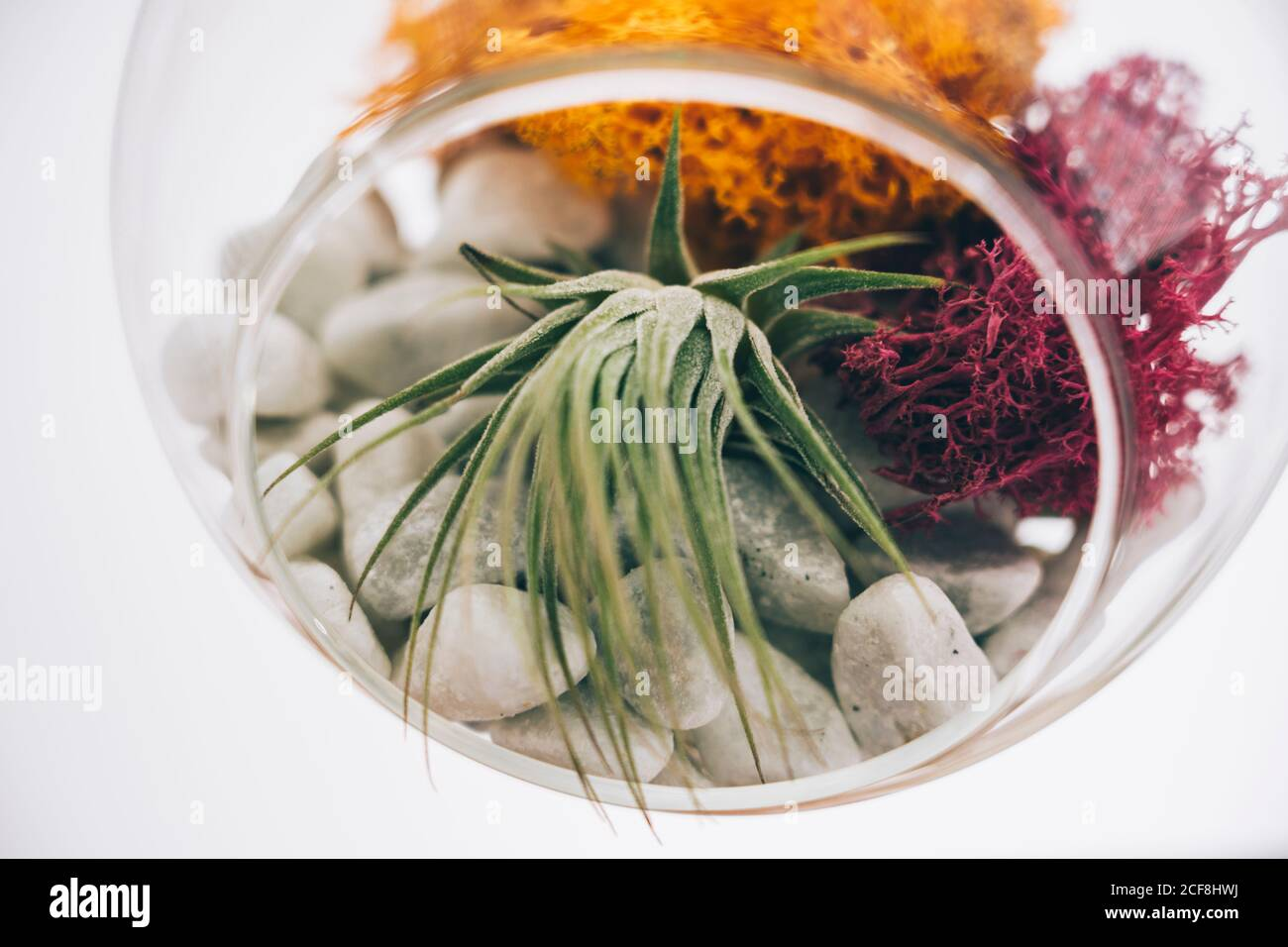Glass Terrarium High Resolution Stock Photography And Images Alamy
