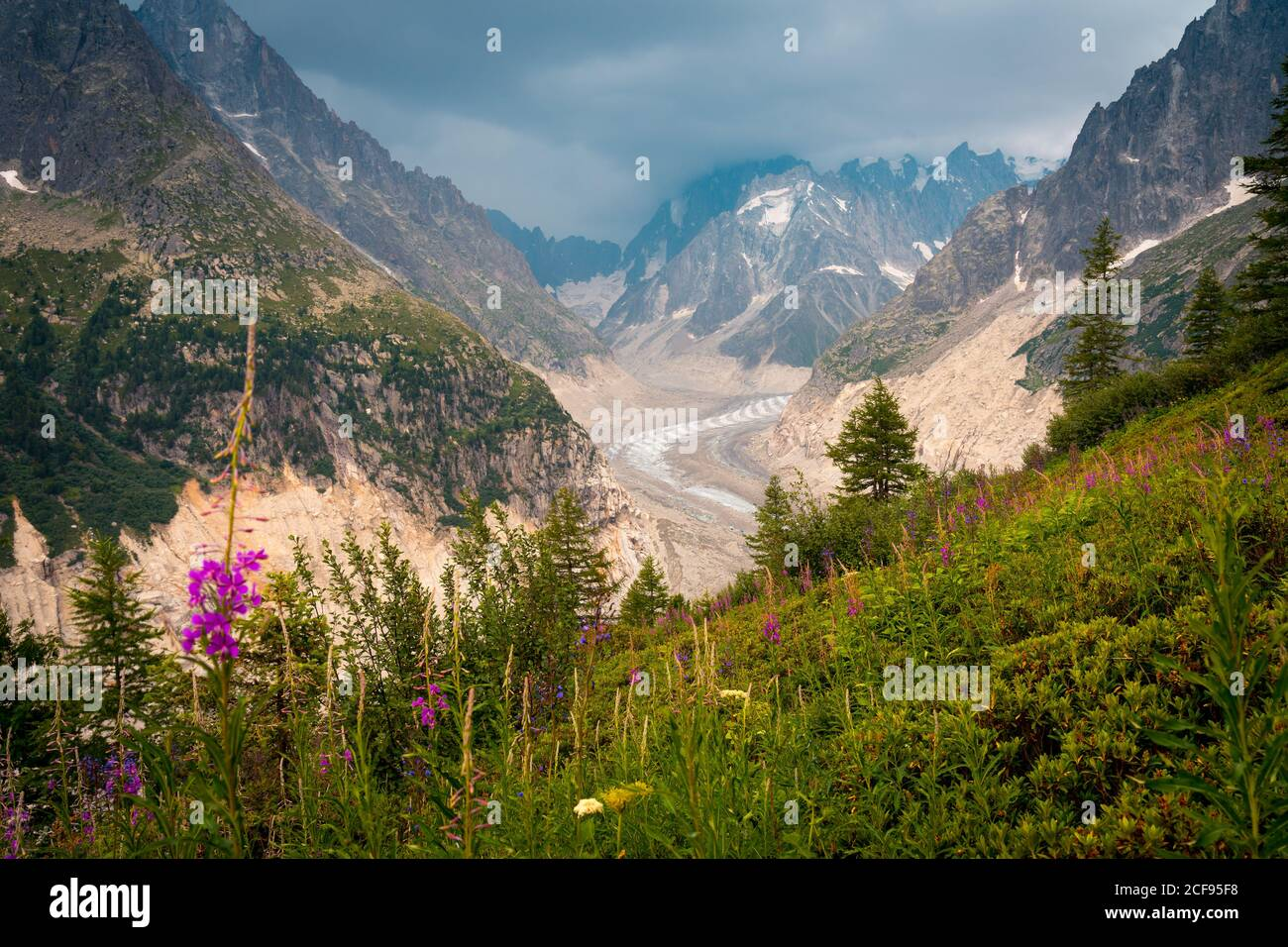 Pink flowers growing on green side of mountain Stock Photo
