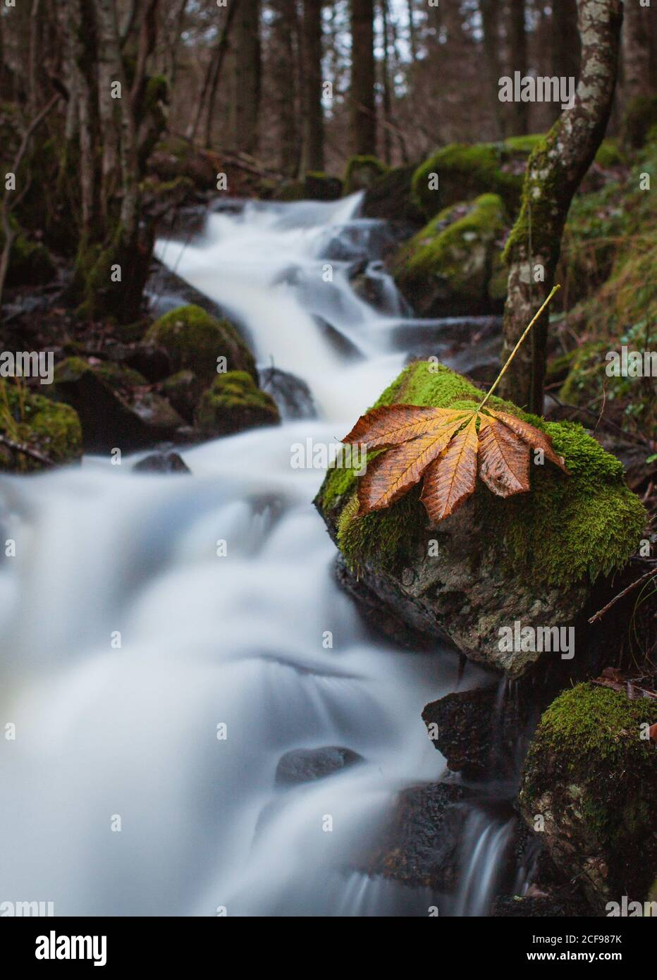 Amazing scenery of narrow river with waterfall cascade flowing through mossy rocky terrain in autumn forest with dry leaf on stone on foreground Stock Photo