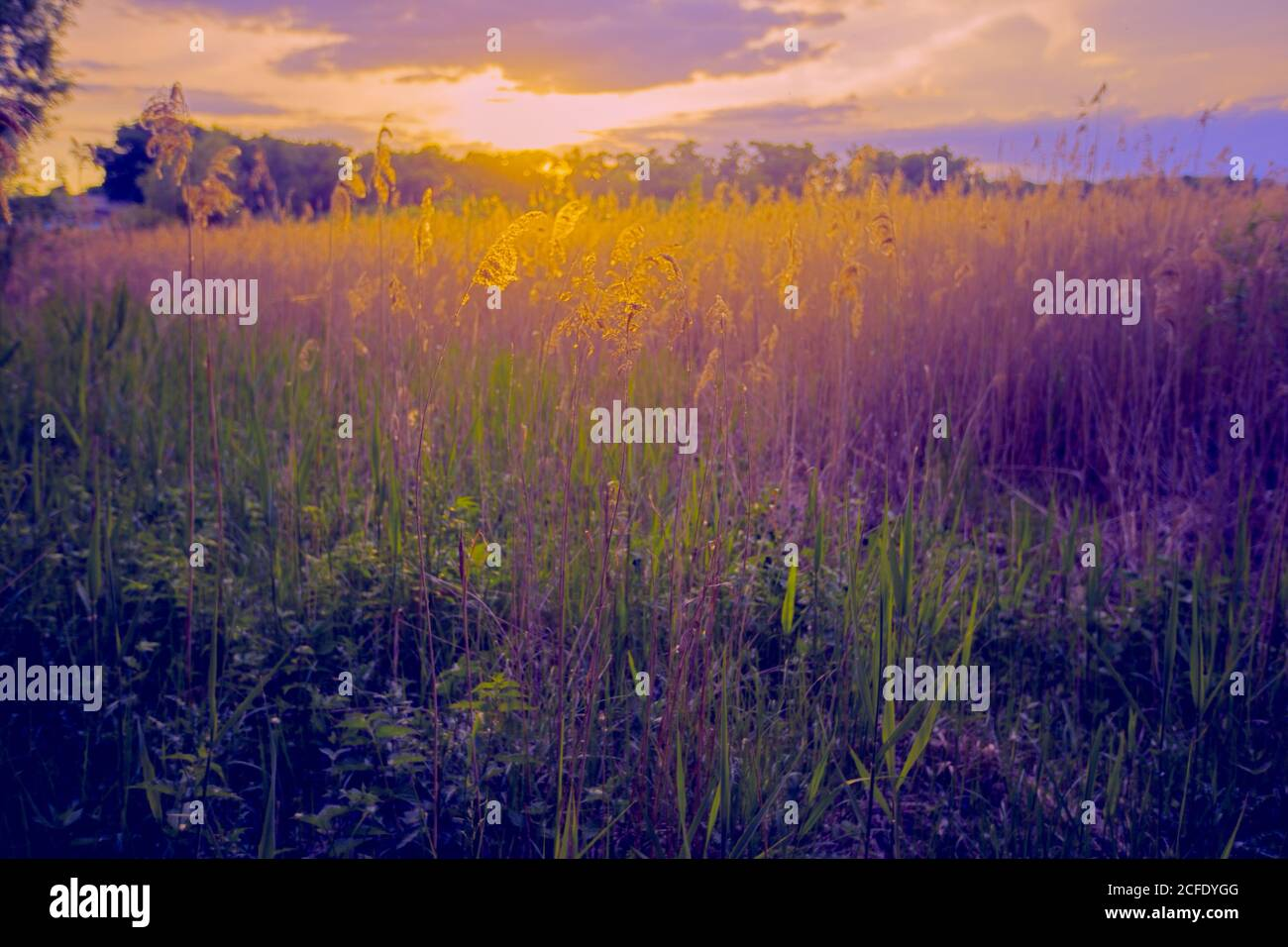 Beautiful landscape. Panorama Fantastic sunset on a summer meadow in purple-yellow tones. Evening nature. Stock Photo