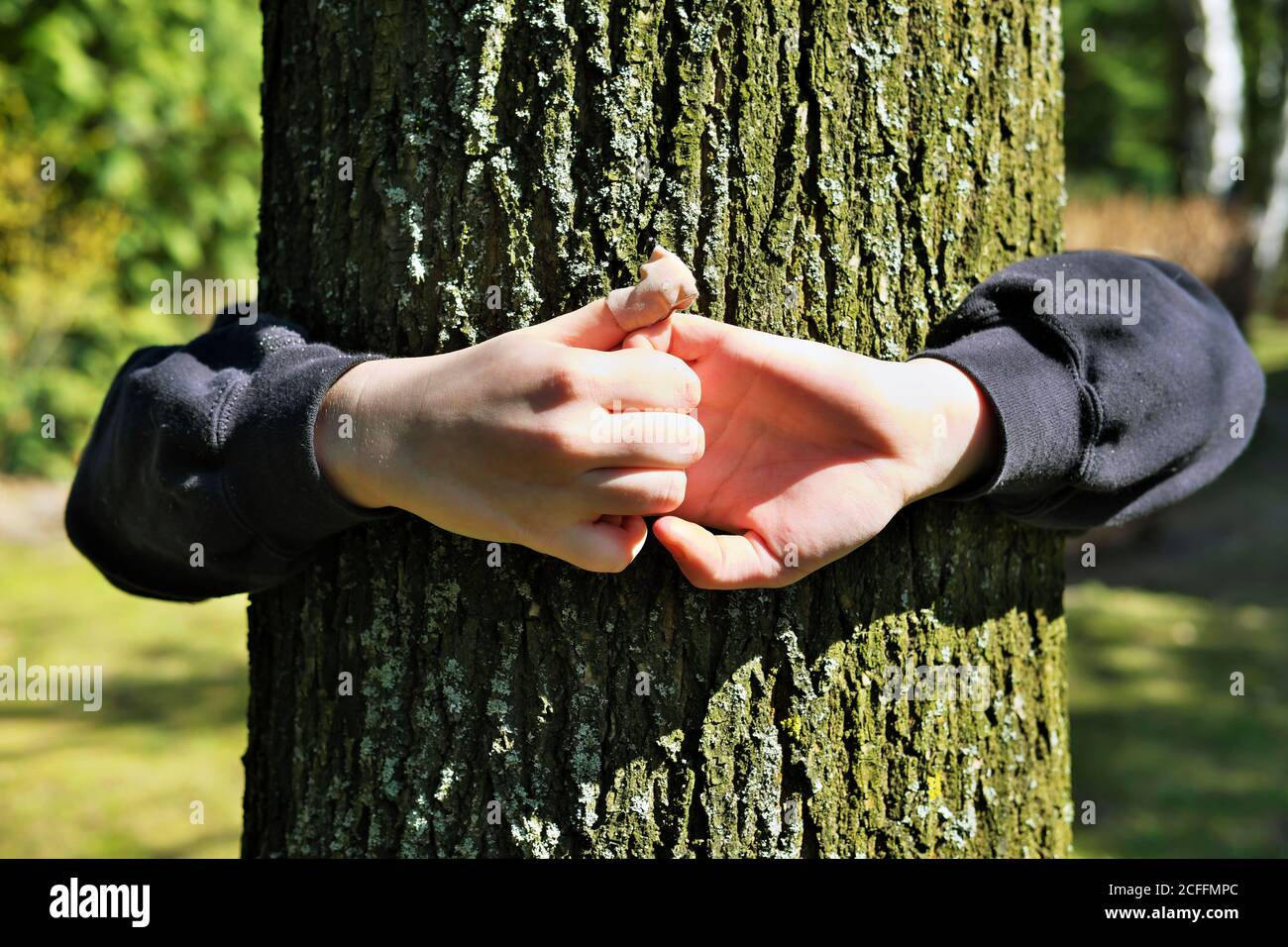 Kod's hands embracing an oak tree trunk, feeling at one with nature Stock Photo