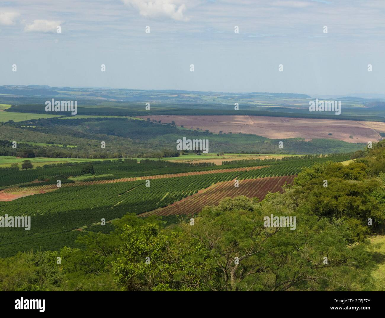 Coffee plantation farm in the mountains landscape on a claudy day Stock Photo