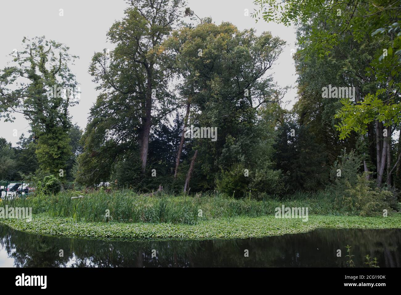 Denham, UK. 7th September, 2020. A large tree suddenly falls to the ground adjacent to a construction site for the HS2 high-speed rail link at Denham Ford. Credit: Mark Kerrison/Alamy Live News Stock Photo