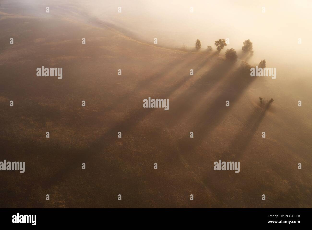 Several lone trees on a field in the fog Stock Photo