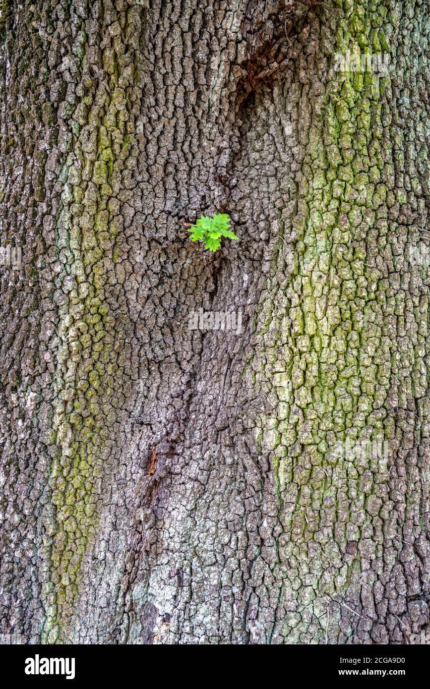 old rough bark including a small green sprout growing out Stock Photo