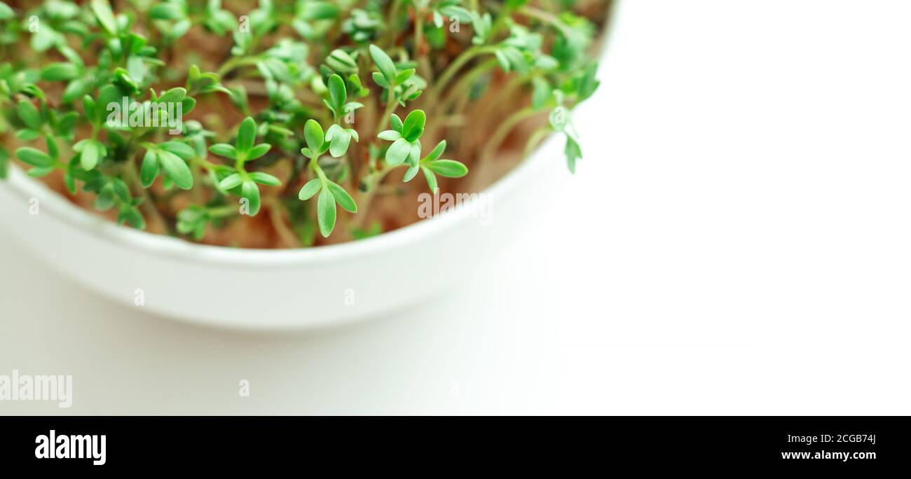 Watercress salad in bowl on white background. Microgreens growing. Healthy eating concept. Close-up - Image Stock Photo