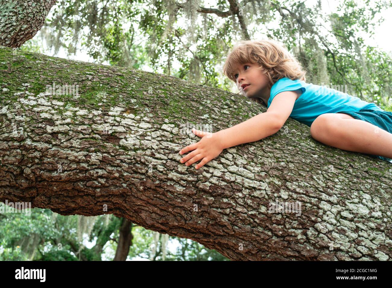 Portrait of a happy Child climbing in a tree in a park. Stock Photo