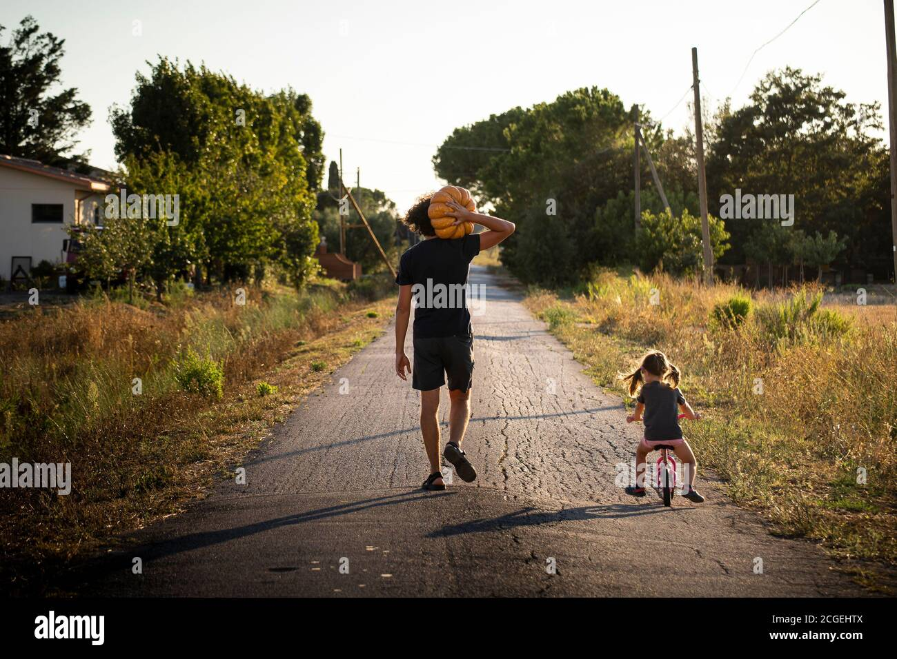 Little child girl, riding a bike, with her young father carrying a big halloween pumpkin on a country road at sunset. Back view. Stock Photo