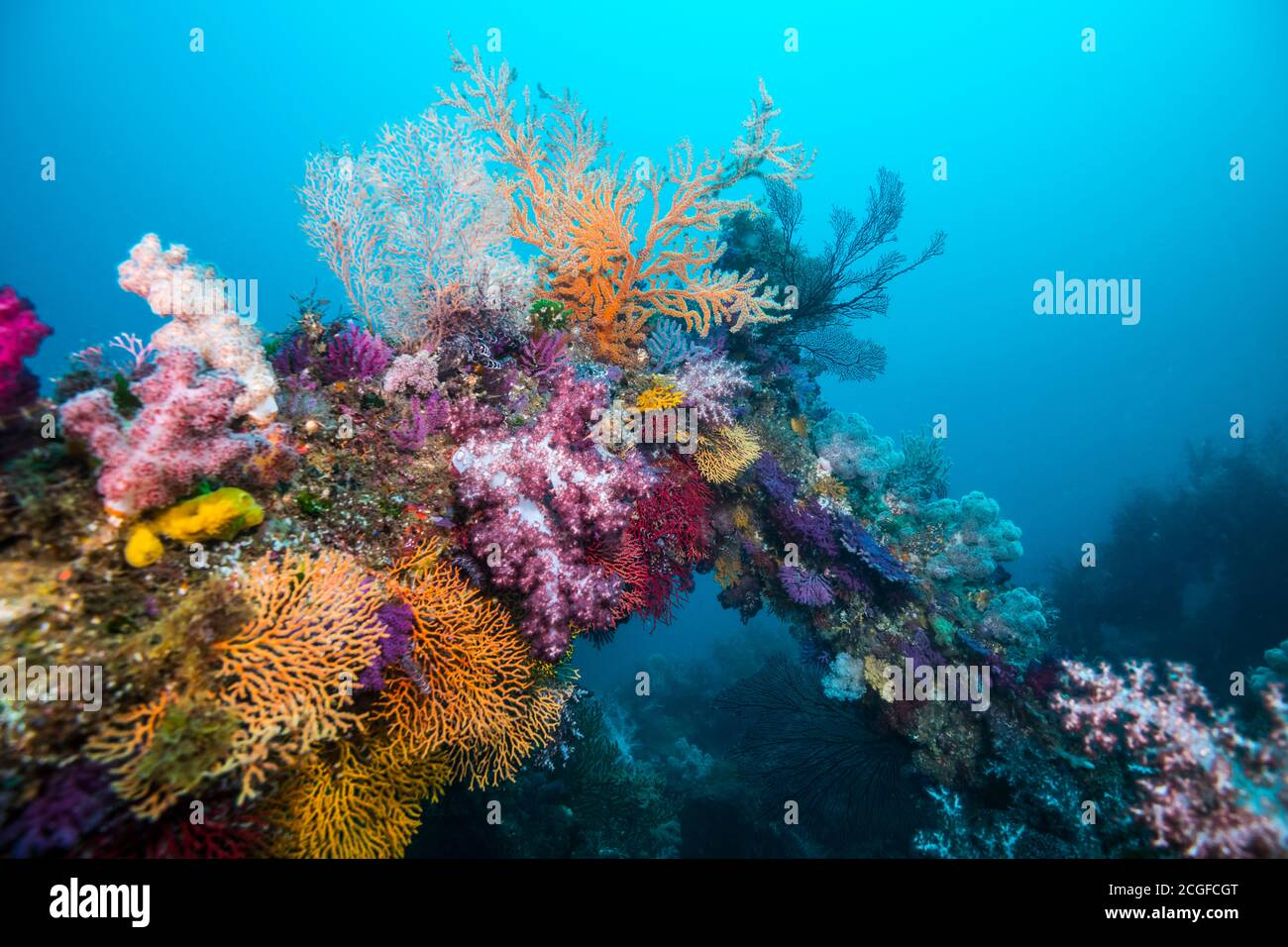A lot of colorful soft corals cover the artificial fish reef against the background of the blue water. Stock Photo