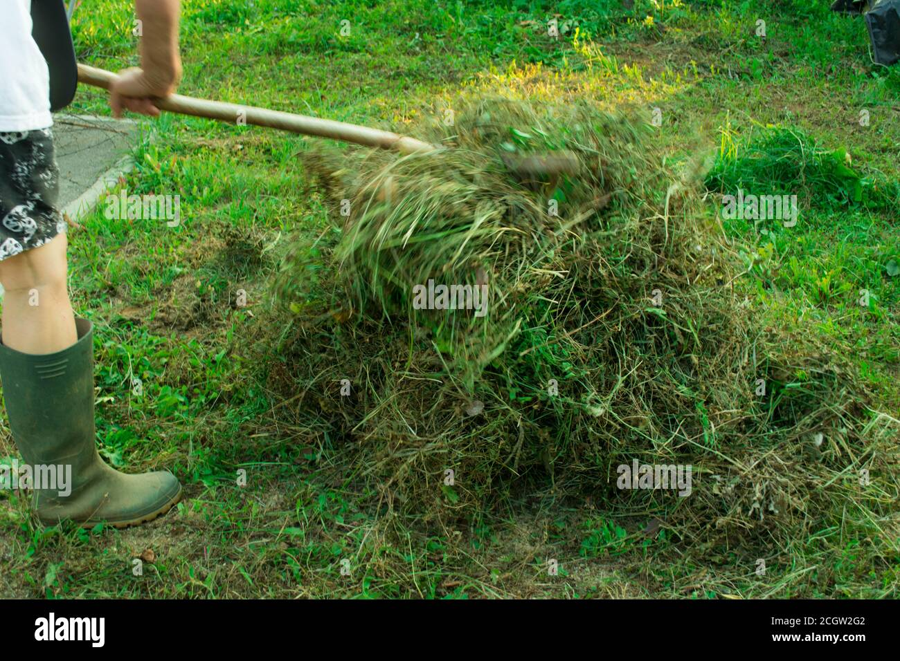 Collecting grass, cutting gras, lawn, collecting clippings Stock Photo