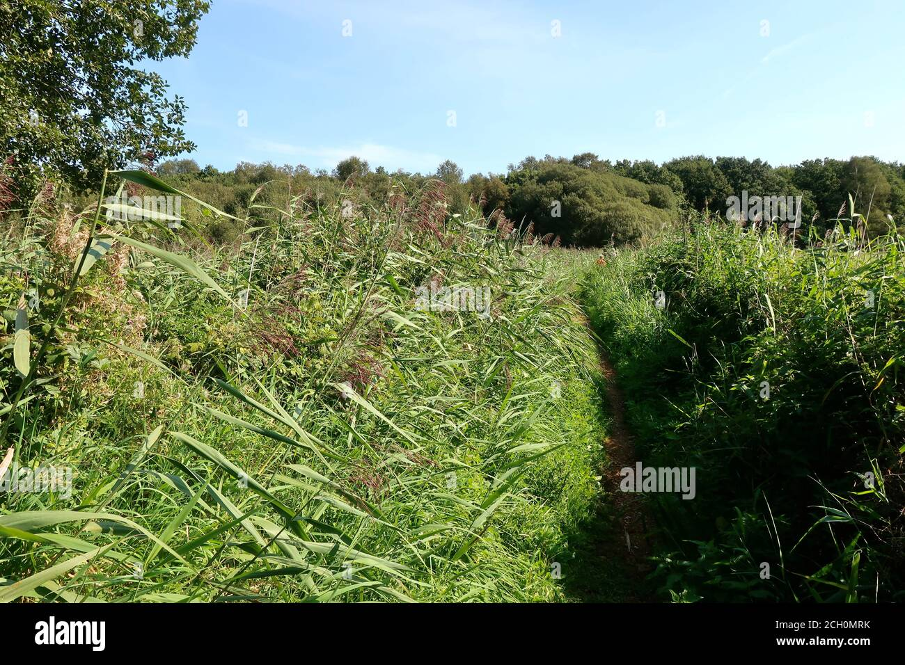 Snape, Suffolk, UK - 13 September 2020: Sunny Sunday autumn afternoon by the River Alde. Badly overgrown riverside footpath. Stock Photo