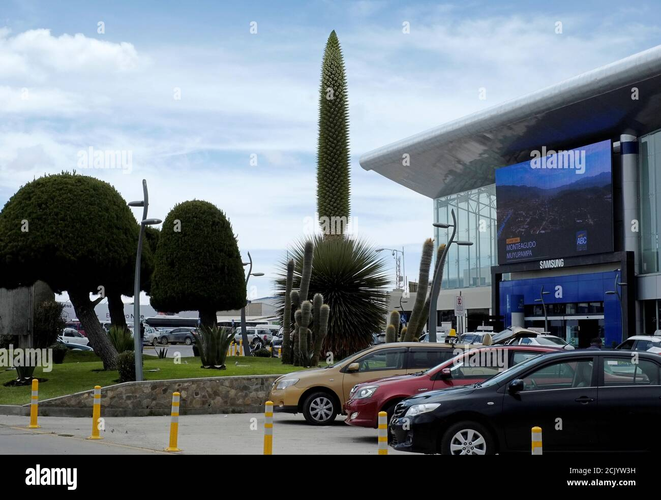 A view of a Queen of the Andes (Puya raimondii) plant as it begins to bloom, outside of El Alto international airport, on the outskirts of La Paz, Bolivia, November 16, 2018. This plant only blooms when the plant reaches an age of about 80 to 150 years old. Picture taken November 16, 2018. REUTERS/David Mercado Stock Photo
