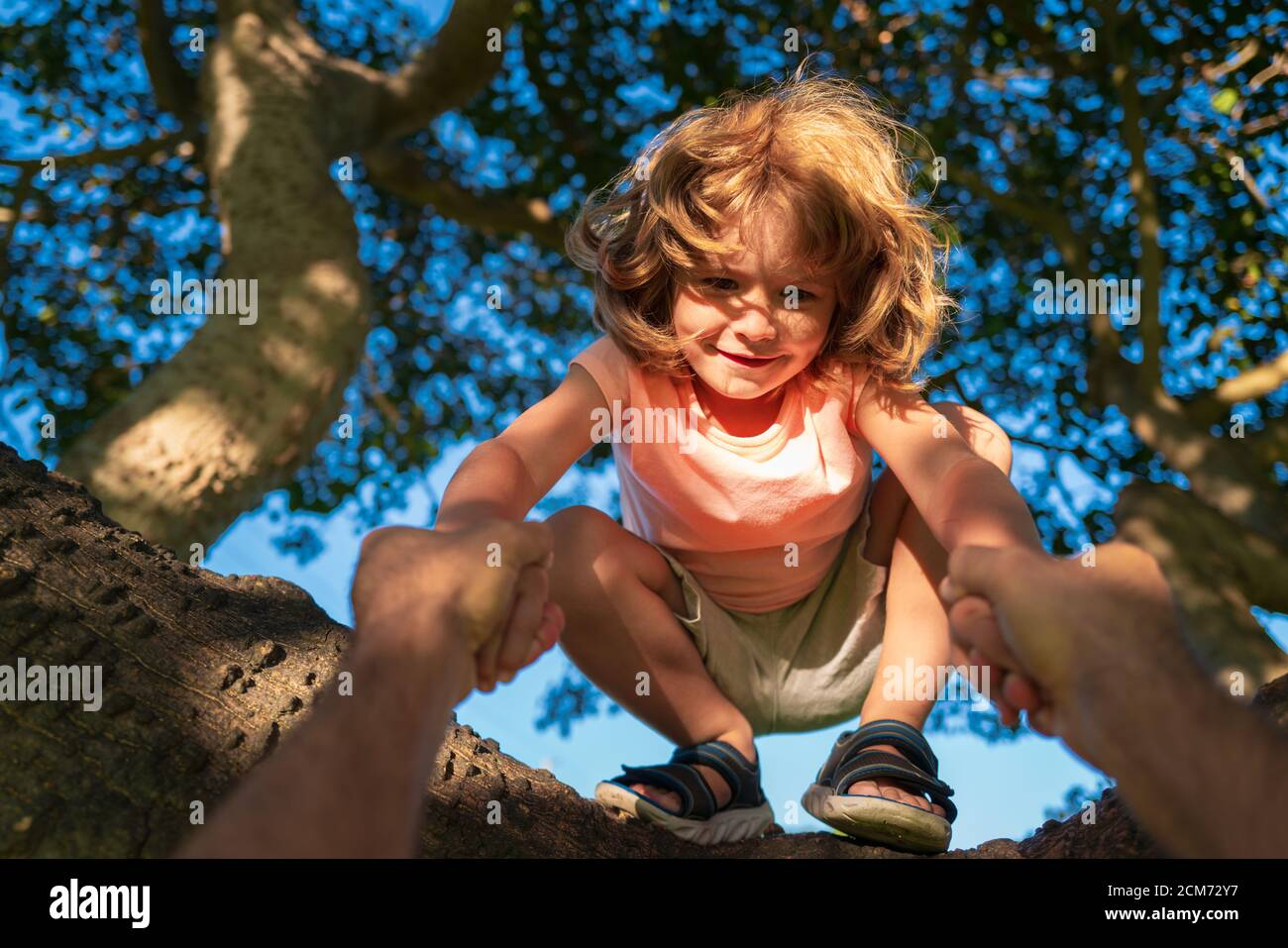Happy young boy Child sitting in a tree. Parent holds the hand of a child. Father teaching son climb tree. Stock Photo