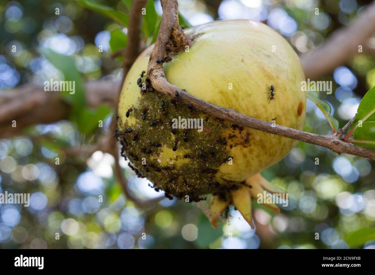 Ants Problem High Resolution Stock Photography And Images Alamy