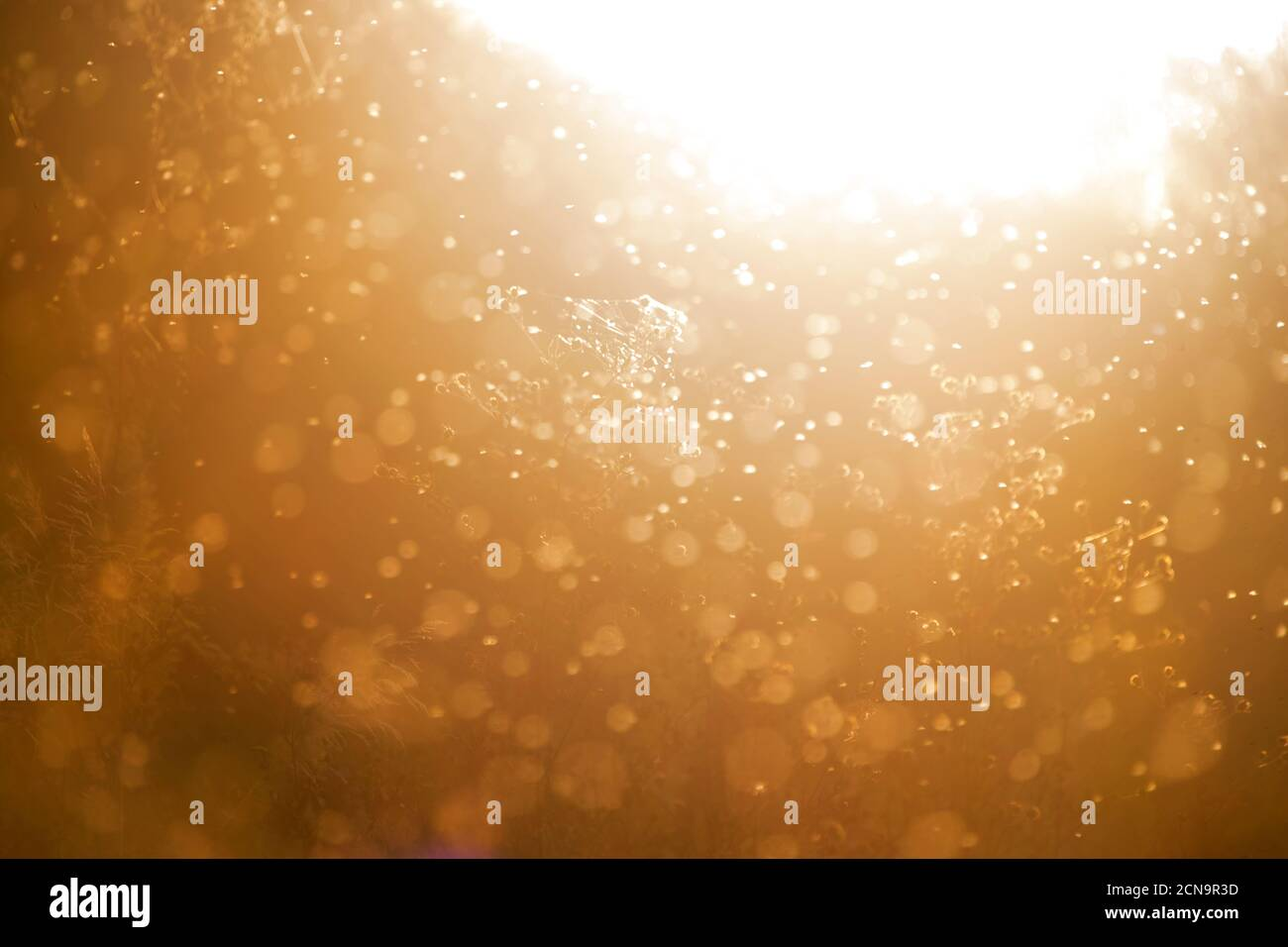Blurred nature background. Small midges fly in the rays of light. Insects swarm in the rays of the setting sun. Mosquitoes. Beautiful nature, shining Stock Photo