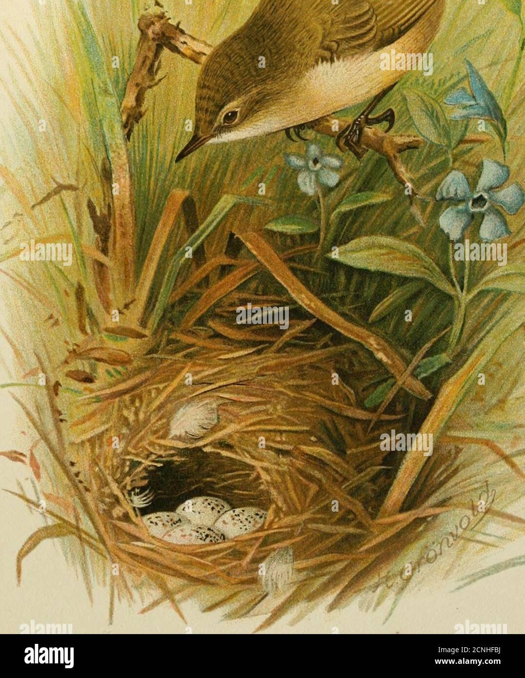 Brown willow rae Sloth Playmat