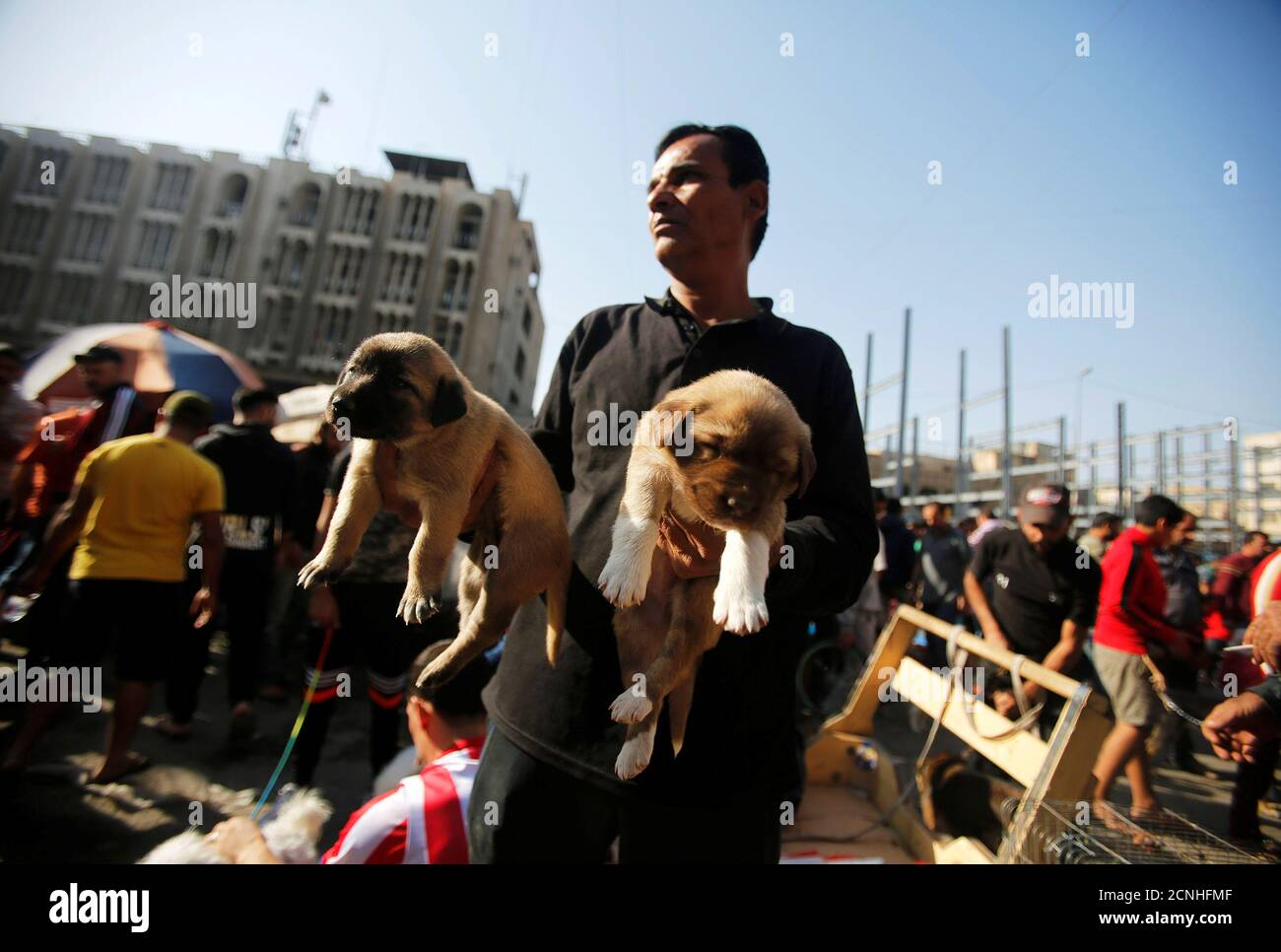 A man sells dogs at the Ghazal pet market in Baghdad, Iraq November 17, 2017. REUTERS/Khalid Al-Mousily Stock Photo