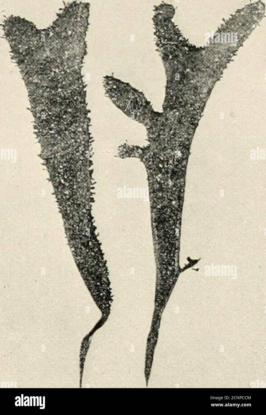 . The sea-beach at ebb-tide : a guide to the study of the seaweeds and the lower animal life found between tidemarks . Stock Photo