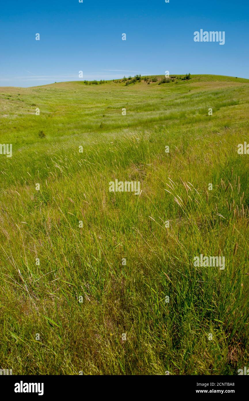 A remaining patch of original prairie near Steptoe Butte in Whitman County in the Palouse, Washington State, USA. Stock Photo