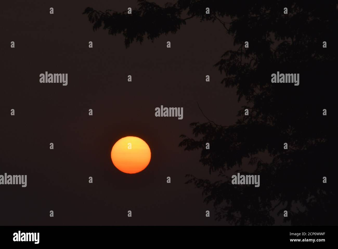 Hazy, smoke-filled sky from California and Oregon wildfires, with surreal, setting sun viewed through tree branches, Browntown, Wisconsin, USA Stock Photo