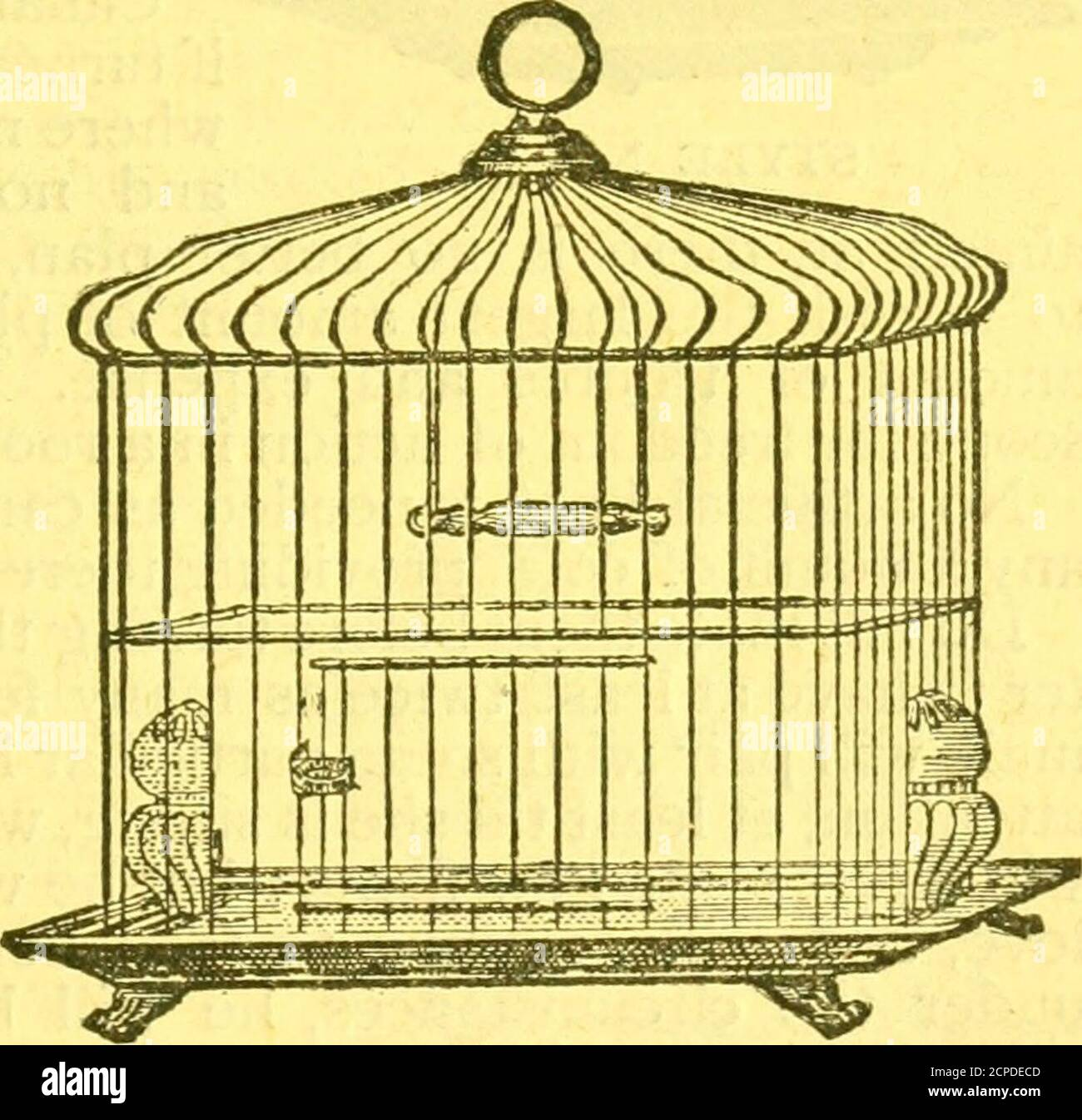 . The Bird food company's book of cage birds: . ^, otherwise fretfulness isencouraged, which it is well to avoid. A wire partitionwill do for a day or so when they are first separated, so. STYLE NO. 2. 22 BIRD FOOD COMPANYS BOOK OF CAGE BIRDS. Stock Photo
