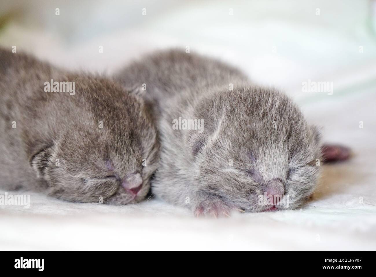 Adorable Newborn Kittens On White High Resolution Stock Photography And Images Alamy