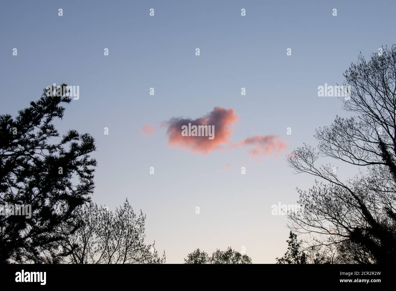 A Heart Shaped Pink Cloud on a Clear Blue Sky With Trees Around the Frame Stock Photo