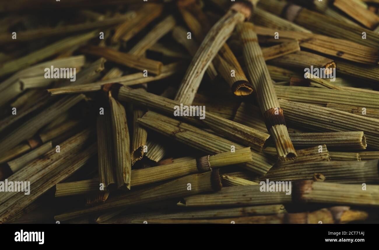 "macro close up Equisetum arvense "" horse tail "" dry plant, selective focus, tea Stock Photo"