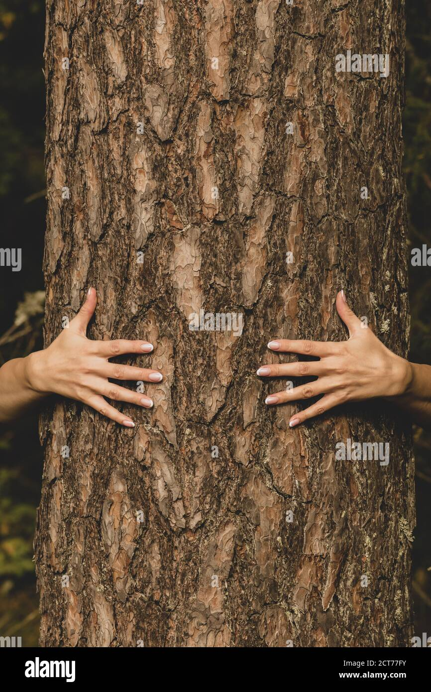 Human and nature concept. Woman hands hugging pine tree in dark foliage background with copy space Stock Photo