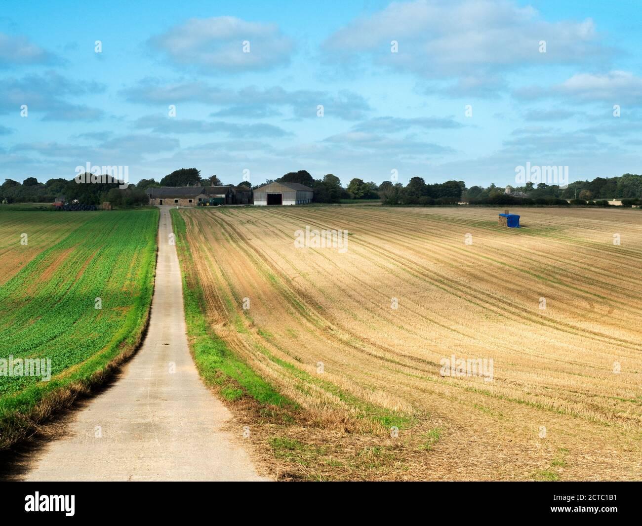 A track across sunlit farmland towards Plompton Grange with Plompton Hall in the distance near Knaresborough North Yorkshire England Stock Photo