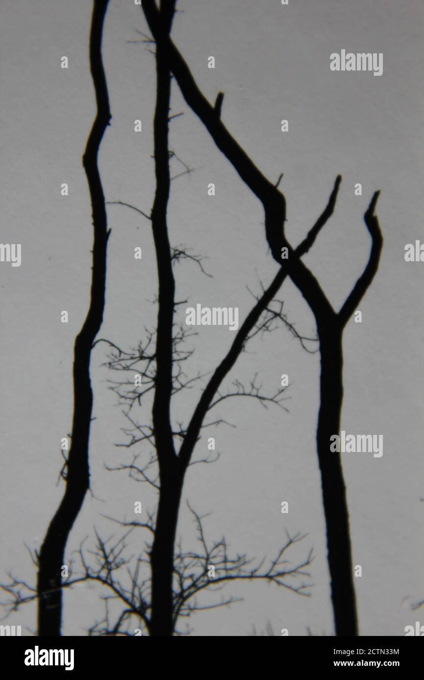 Fine 1970s vintage black and white photography of worn and weathered trees standing in the wilderness. Stock Photo