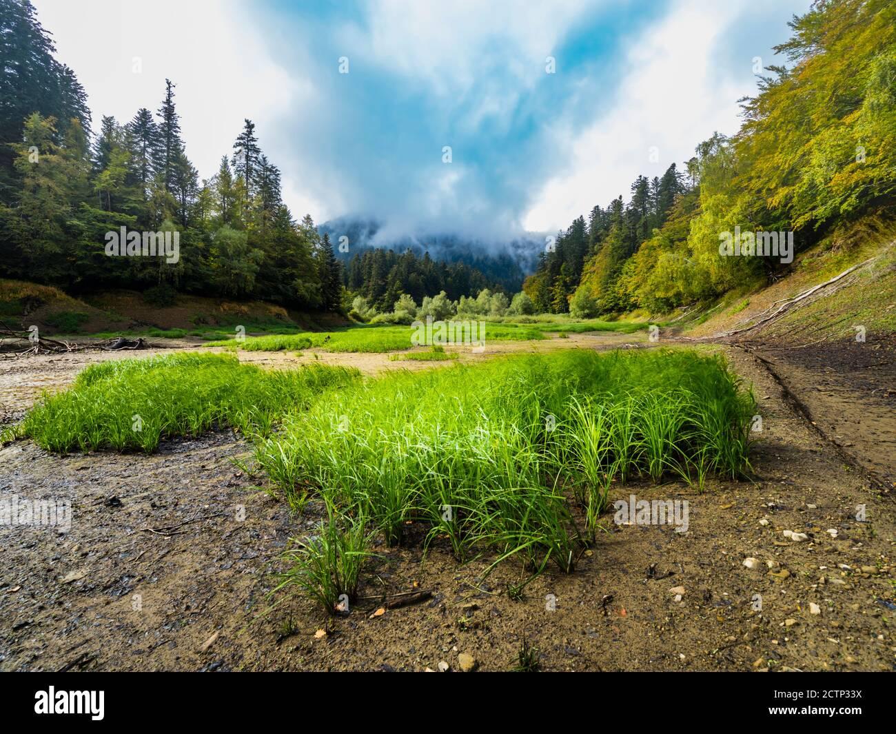 Fresh Green grass on lake river bed riverbed near Lokvarsko Lokve lake and Mrzla vodica in Croatia Europe Stock Photo