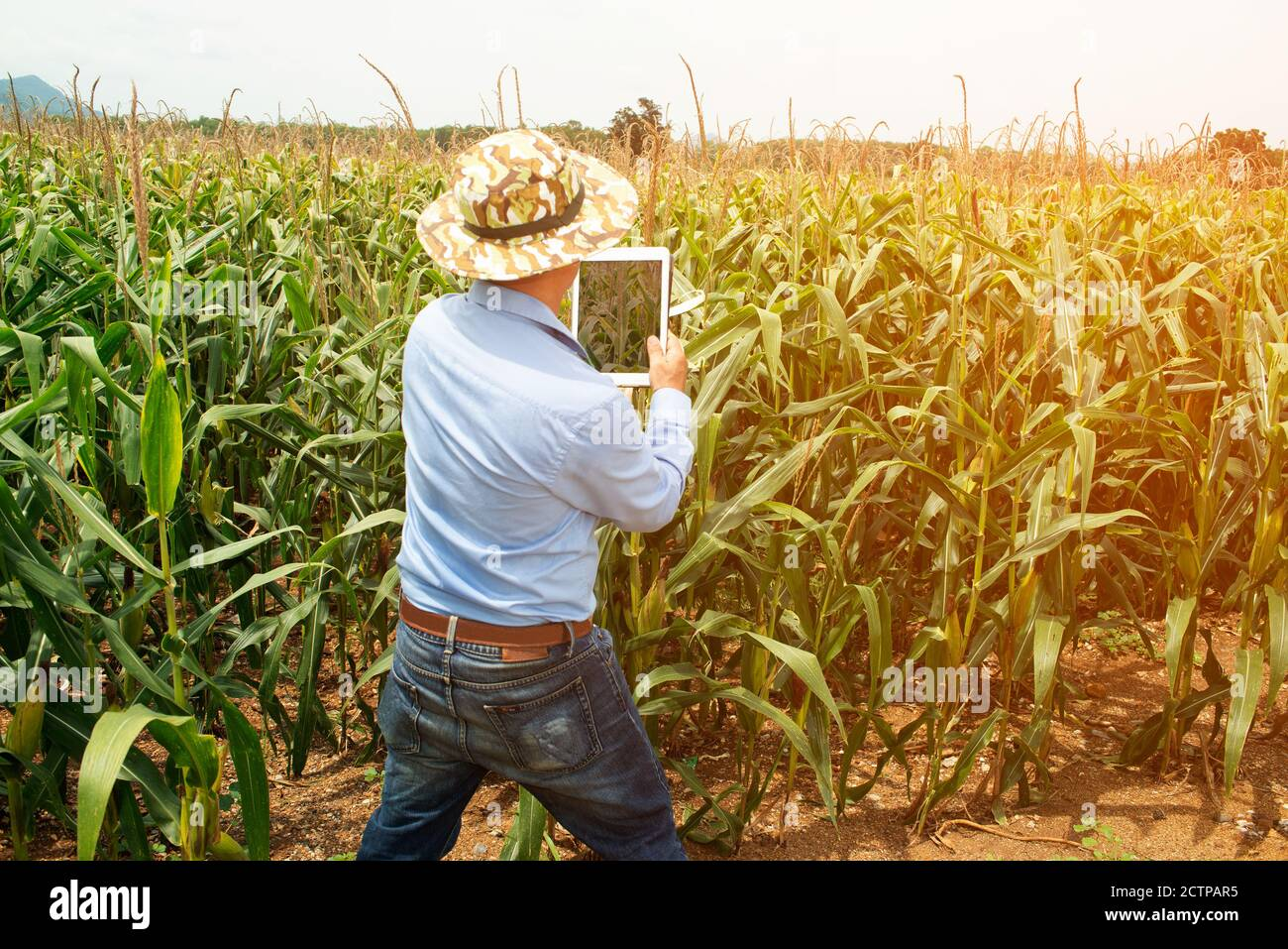 The Asian elder farmers male use a tablet to take pictures of corn fields for further analysis in the lab. Stock Photo