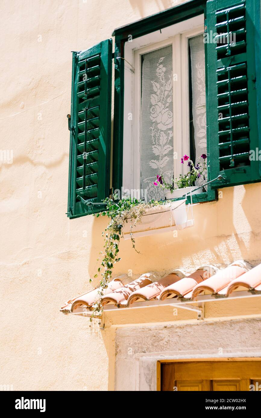A window with open shutters in green and flowers on the windowsill by the white curtain above the door to the house. Stock Photo