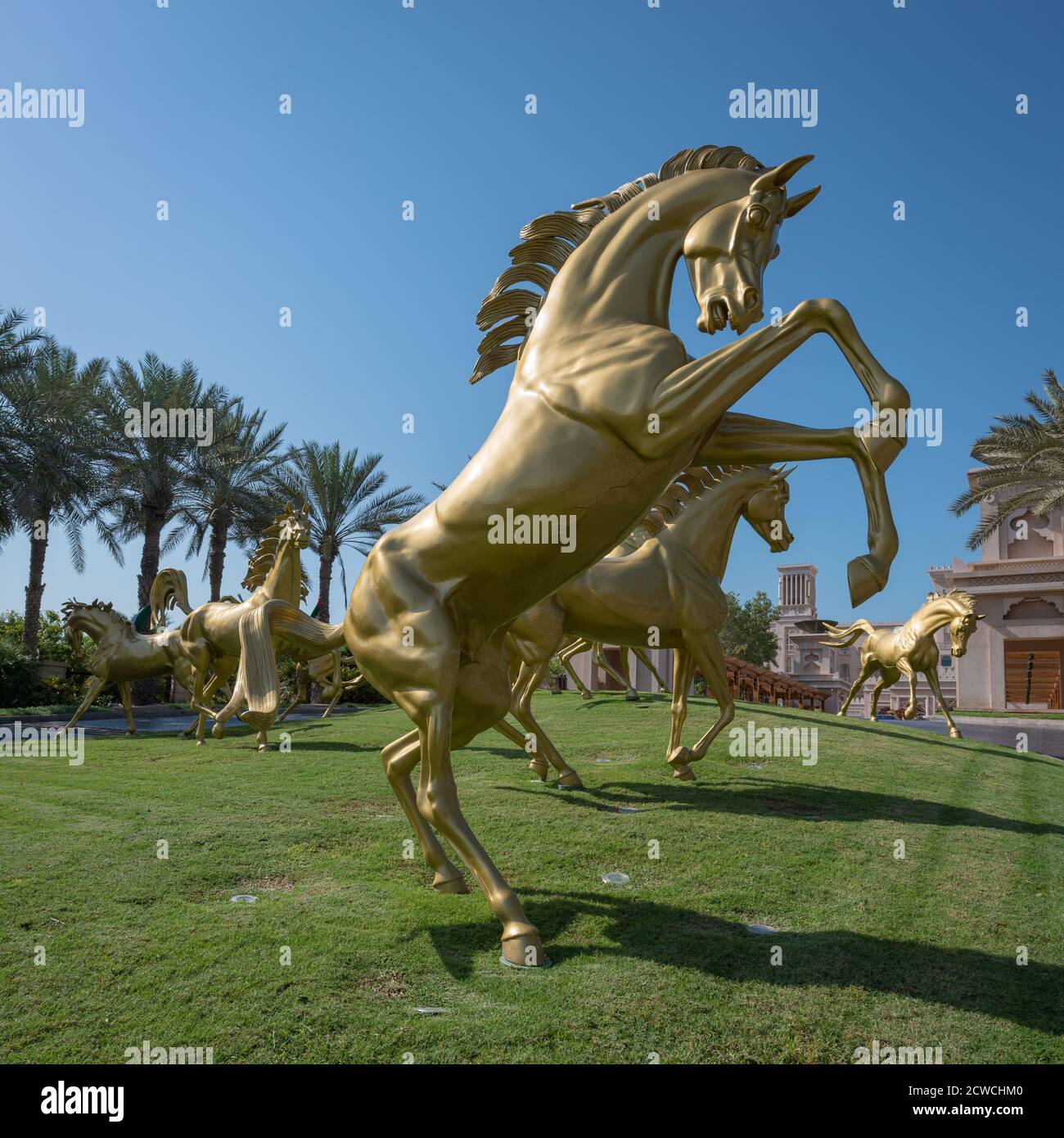 Arabian Horses Dubai High Resolution Stock Photography And Images Alamy
