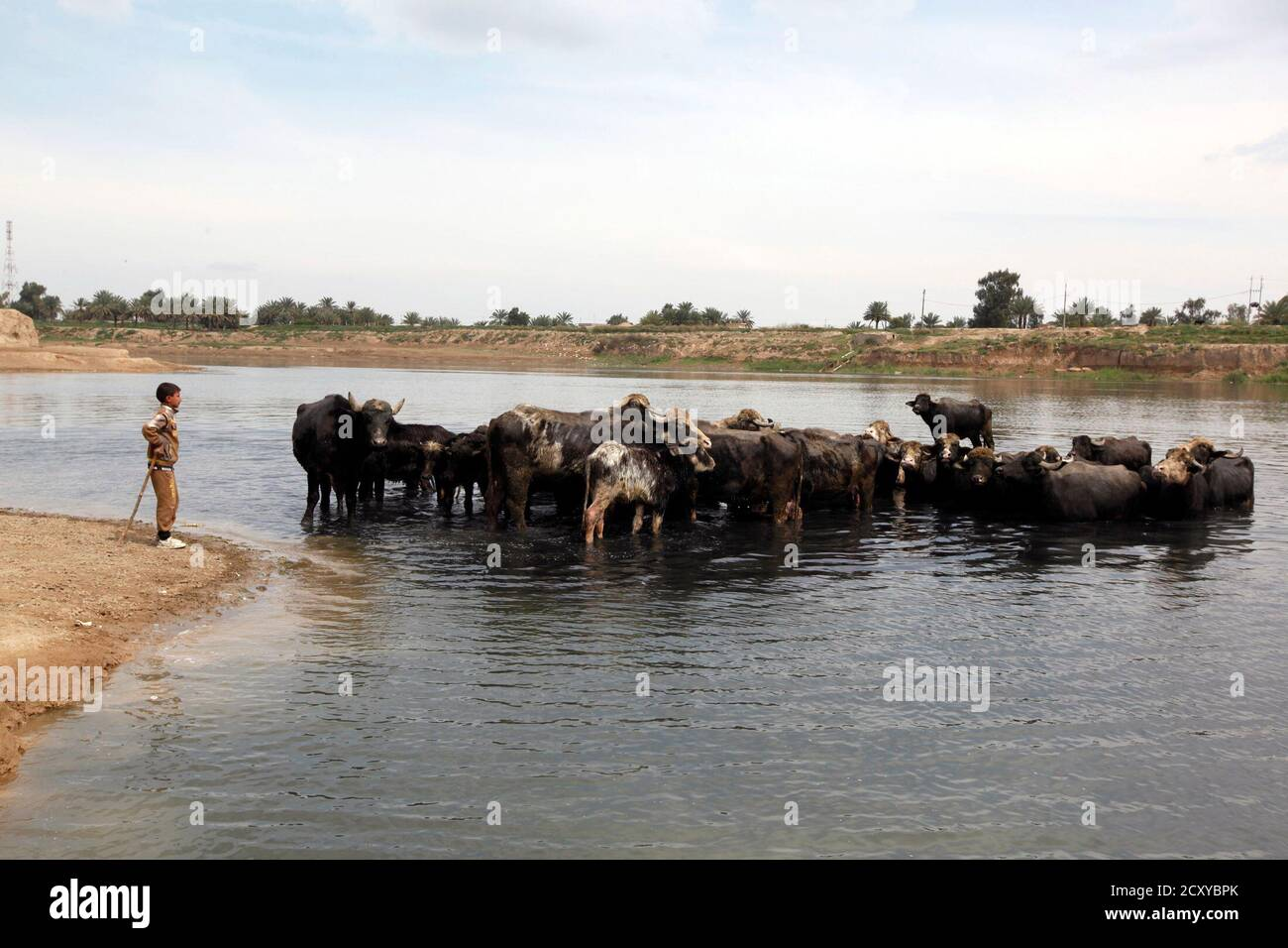 A boy stands near a herd of buffaloes by the Diyala river in eastern Baghdad's al-Futheliyah district, March 15, 2014. REUTERS/Ahmed Saad (IRAQ - Tags: SOCIETY ANIMALS) Stock Photo