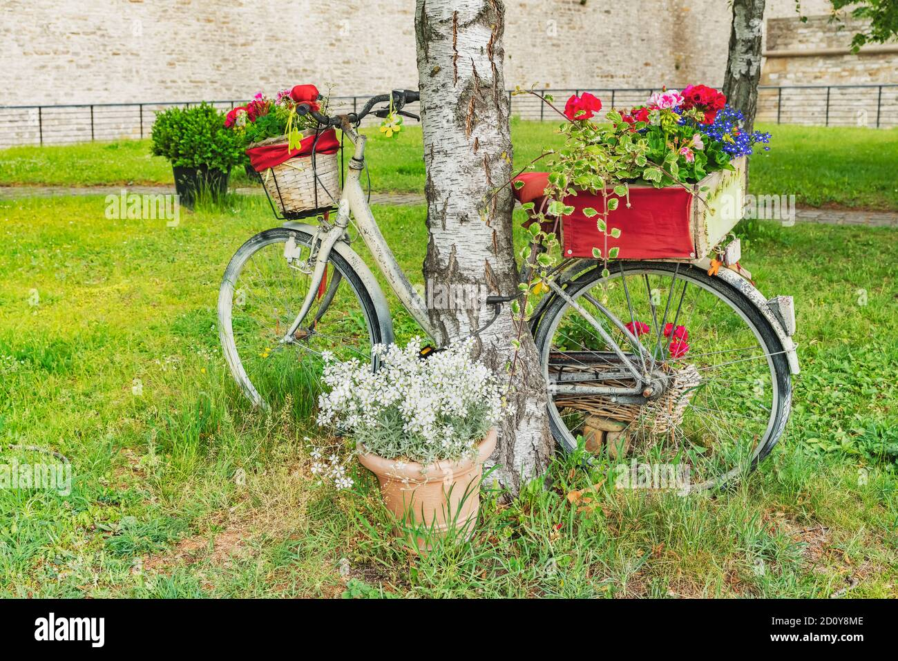 A bicycle decorated with flowers is leaning against a tree. The bicycle is on the Petersberg in Erfurt, capital of Thuringia, Germany, Europe Stock Photo