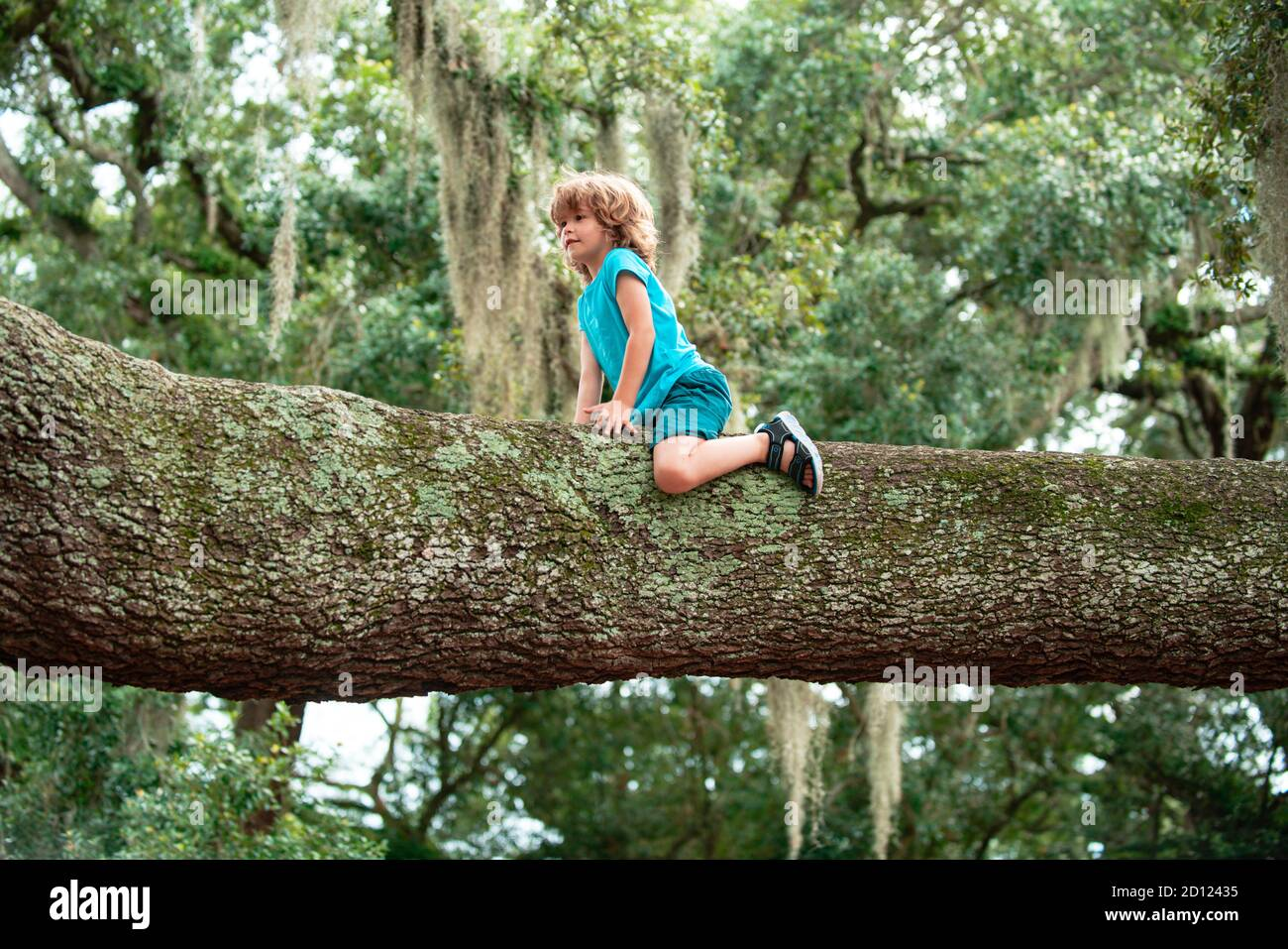 Kids climbing trees. Portrait of cute child boy sitting on the big old tree on sunny day. Stock Photo