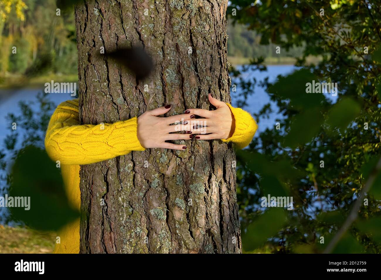 Woman hands hugging pine tree trunk in autumn forest Ecology and environment concept, eco lifestyle - change the world, protection for life and planet Stock Photo