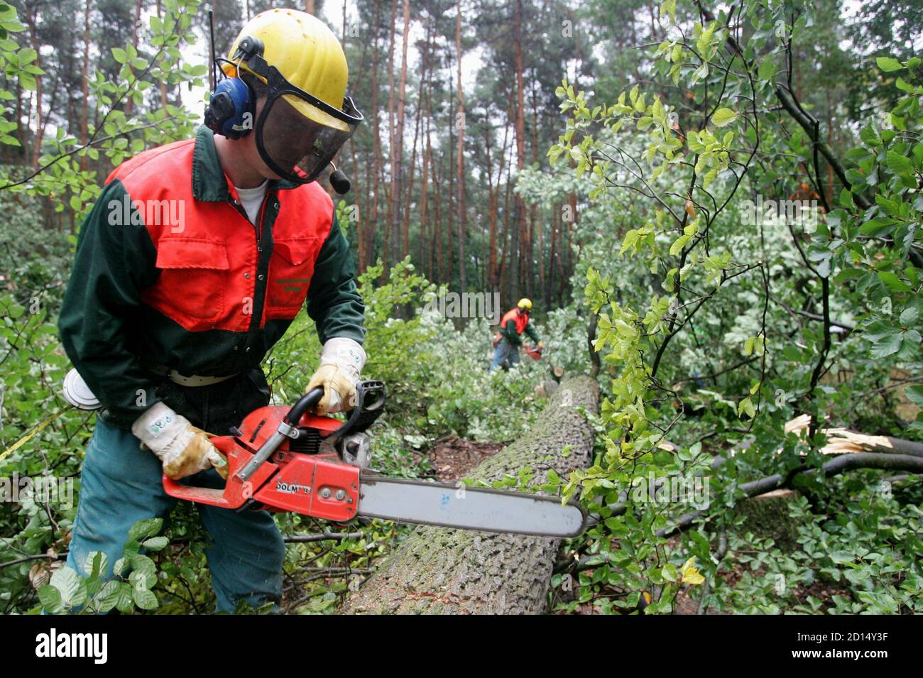 """German lumberjacks cut trees in a sealed-off forest area called """"Bannwald"""" near Frankfurt's Rhine-Main airport September 12, 2005. Construction works for a new runway started on Monday as German police expect protestors and environmental activists against the extension of the airport. REUTERS/Vincent Kessler  vk/TY Stock Photo"""