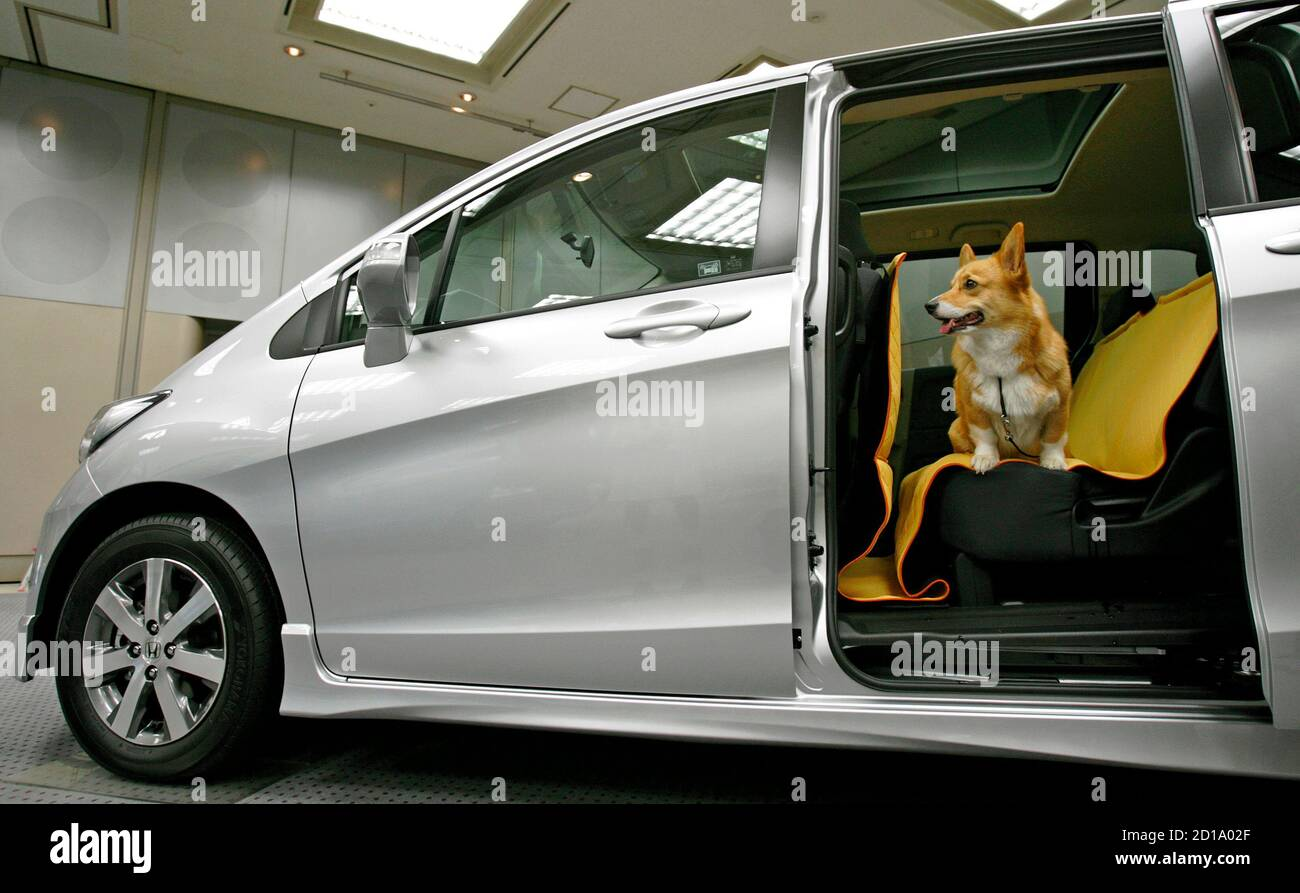 """A dog sits in Honda Motor's minivan """"Freed"""" at a briefing event in Tokyo May 23, 2008. Japan's No. 2 automaker is looking to win points with canine fans using a website that offers information on dog-friendly cafes and hotels, dimensions for its cars' cargo space for stashing cagfes, as rating system that ranks seat fabric for ease of removing dog hair, and much more. Picture taken May 23, 2008.   REUTERS/Kiyoshi Ota (JAPAN) Stock Photo"""