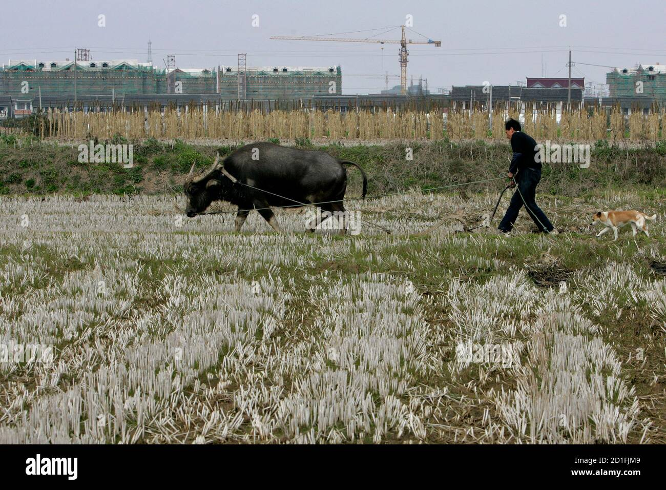 A farmer works on reclaimed land by buffalo in Nanhui district on the outskirts of Shanghai February 28, 2007. Chinese leaders Hu Jintao and Wen Jiabao have made the countryside a political priority. They abolished an ancient grains tax, promised free schooling, and are offering financial aid and subsidies for seeds and infrastructure. To match feature CHINA-PARLIAMENT-COUNTRYSIDE     REUTERS/Aly Song (CHINA) Stock Photo