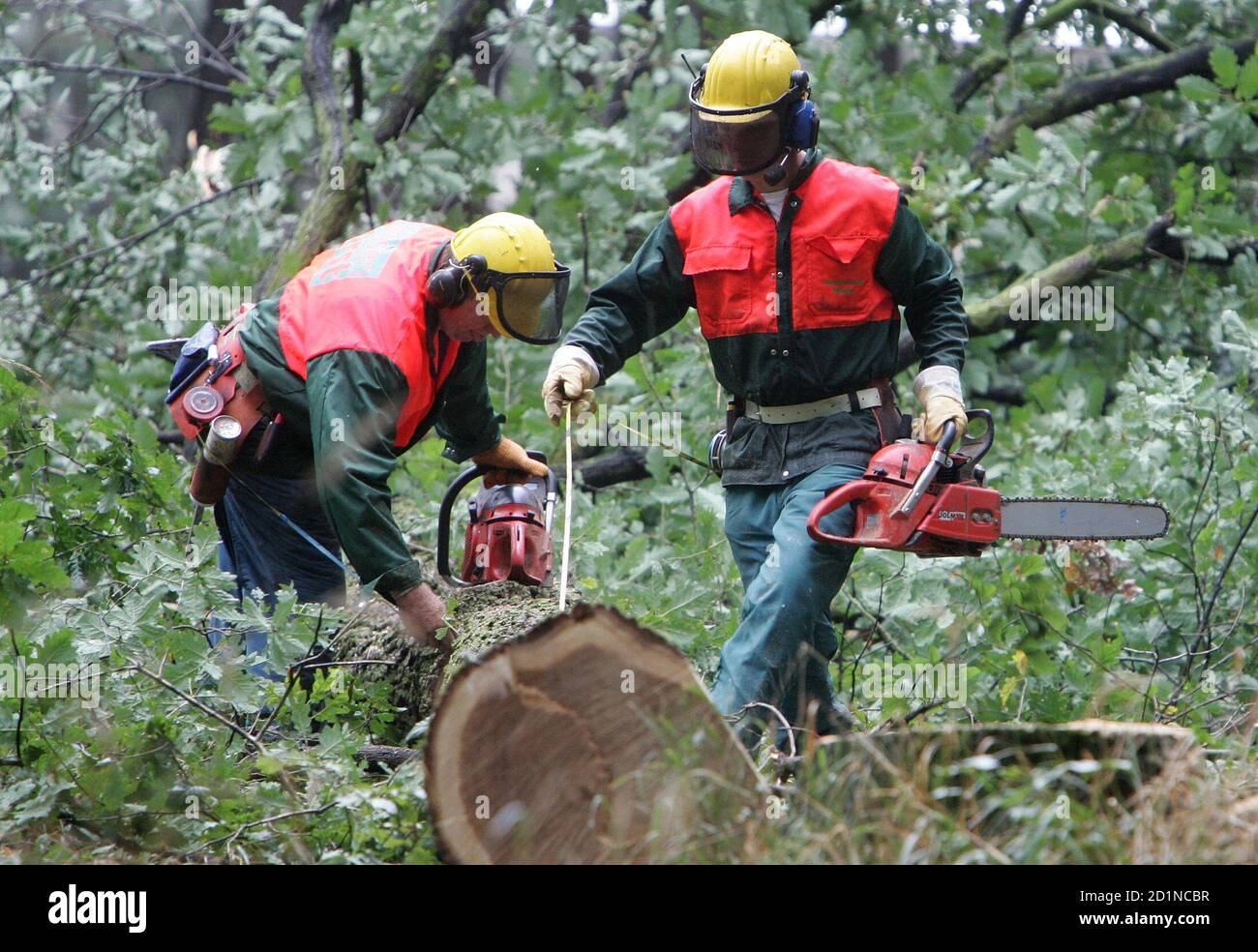 "German lumberjacks cut trees in a sealed-off forest area called ""Bannwald"" near Frankfurt's Rhine-Main airport September 12, 2005. Construction works for a new runway started this morning as German police expect protestors and environmental activists against the extension of the Airport. REUTERS/Vincent Kessler  vk/TY Stock Photo"