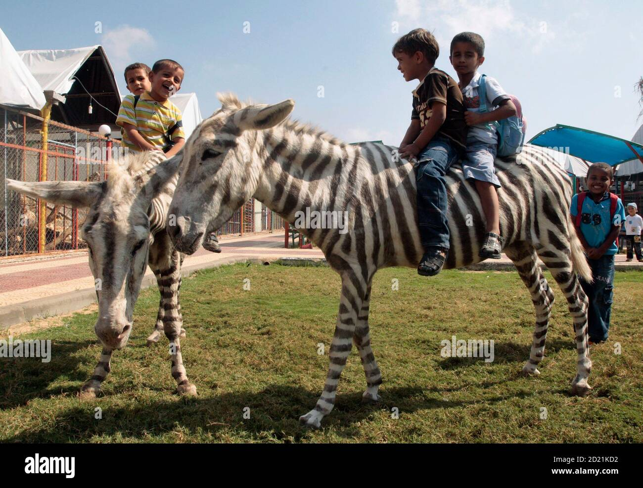 Palestinian boys ride dyed donkeys at Marah Land zoo in Gaza City October 8, 2009. Two white donkeys dyed with black stripes delighted Palestinian kids at a small Gaza zoo on Thursday who had never seen a zebra in the flesh. A genuine zebra would have been too expensive to bring into Israel-blockaded Gaza via the smuggling tunnels under the border with Egypt, said zoo owner Mohammed Bargouthi. REUTERS/Mohammed Salem (GAZA SOCIETY ENVIRONMENT ANIMALS IMAGES OF THE DAY) Stock Photo